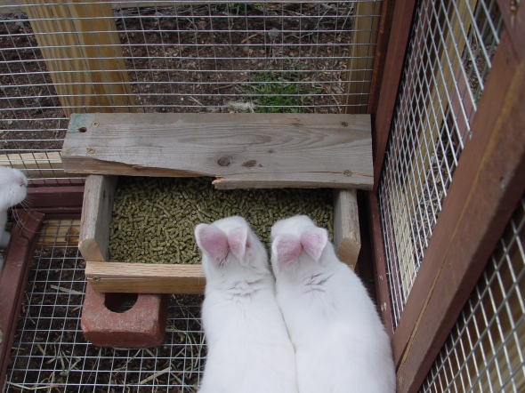 make your own rabbit feeder