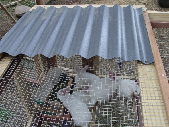 corrugated roofing on a rabbit hutch