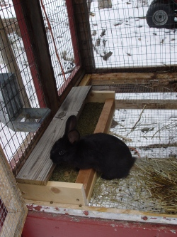 rabbit trough feeder
